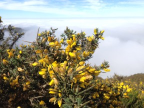 """""""gelbe Blüten"""" © Rennert"""