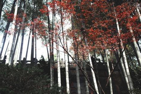 Lingyin Temple in Hangzhou III